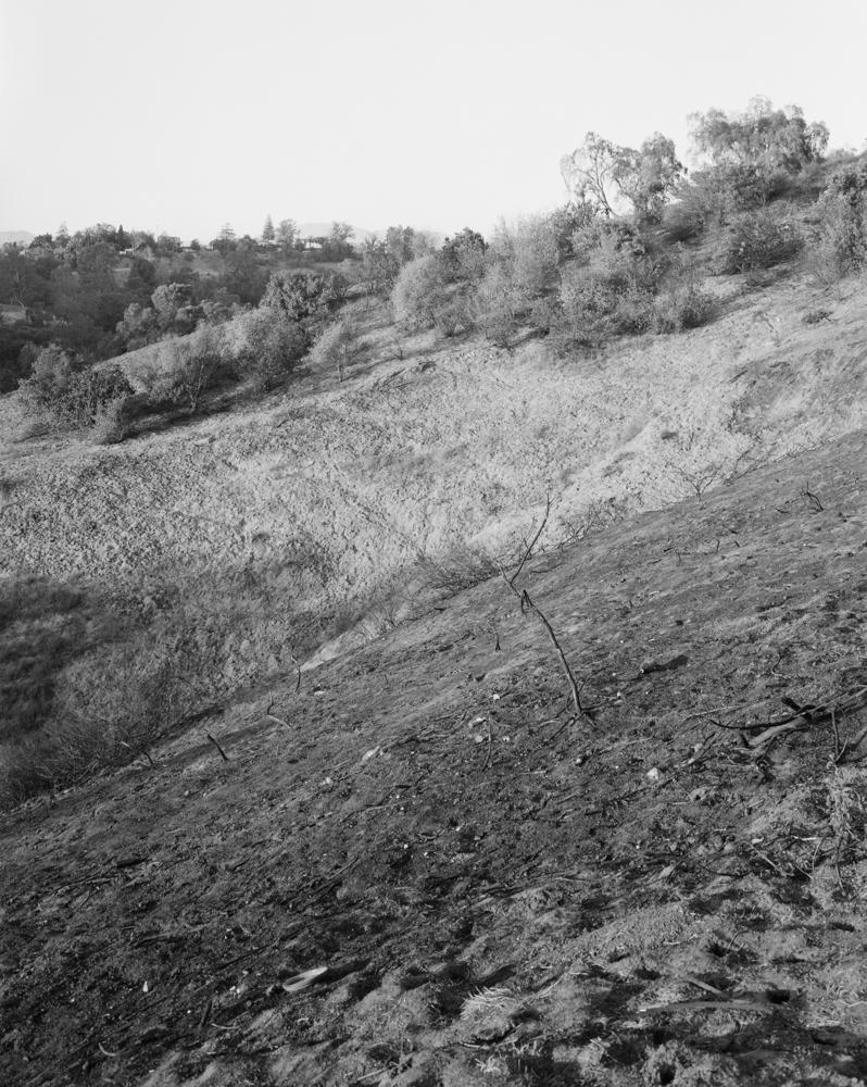 virginia-wilcox-arboreal-14