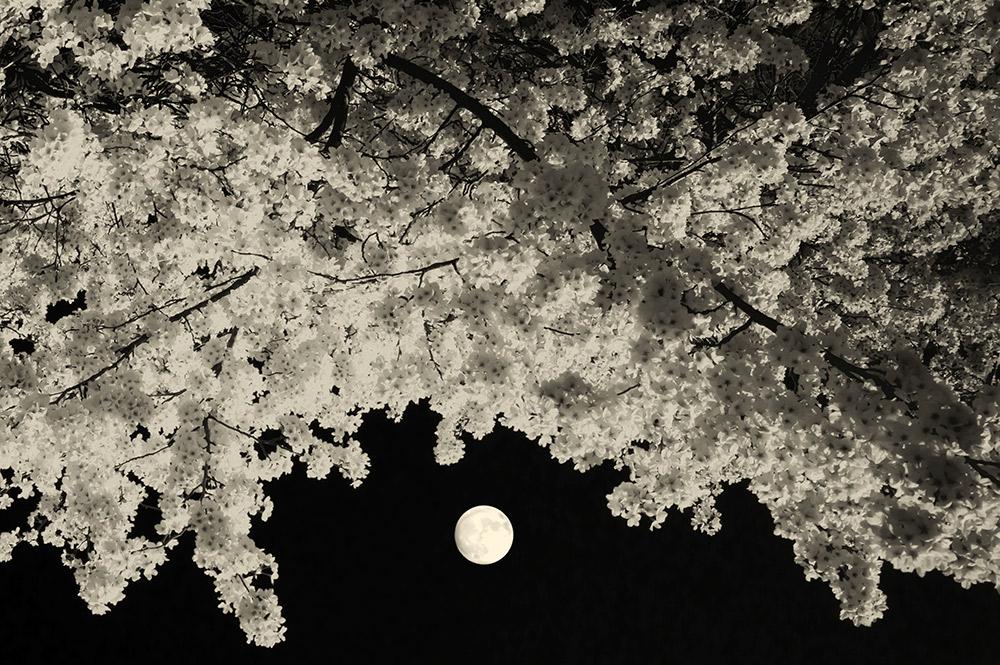 7- Moon-Addict-II-2021-©-Paul-Cupido