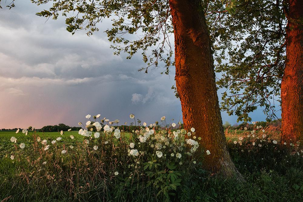 RNW_Blossoming