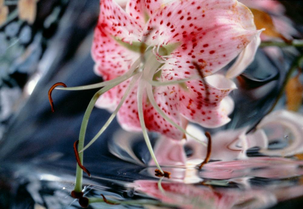 Mariette_Flower_01 001