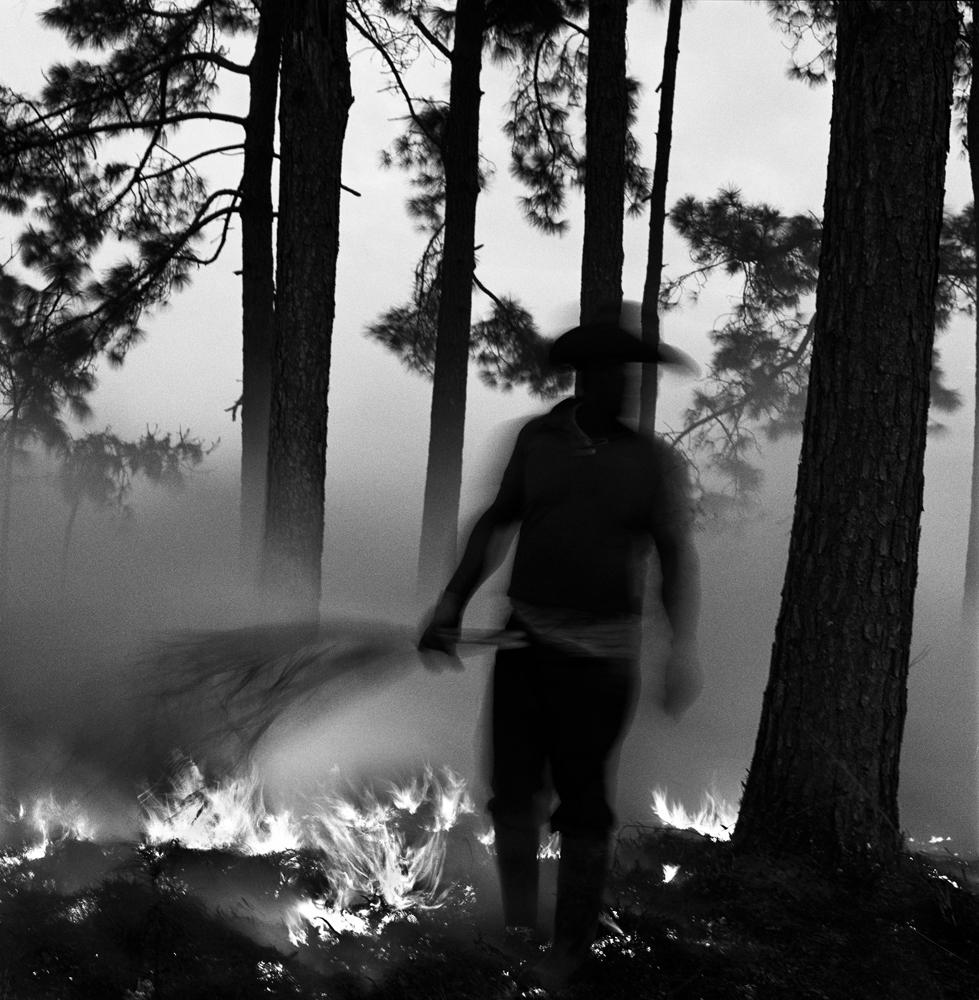 Burning Pine Needles