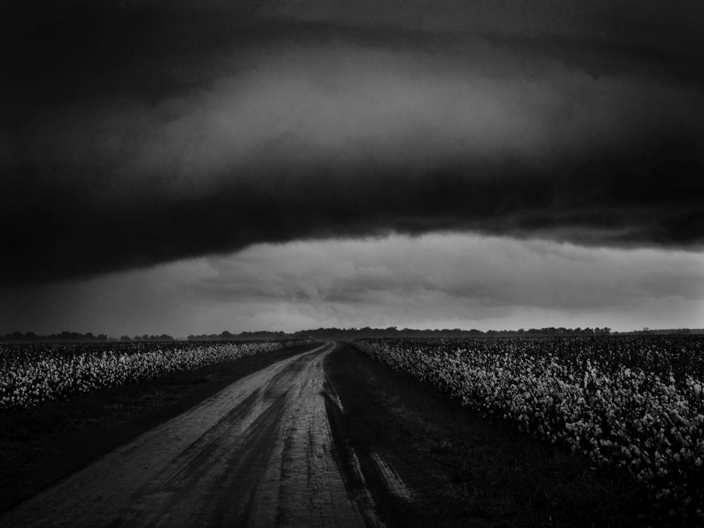Caffery_Stormy Sky Over Cotton Field_10