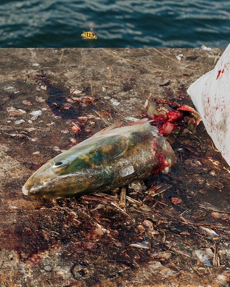 14_Far Apart by James Prochnik_Fish Head with Yellowjacket FAR APART_Y2A5321