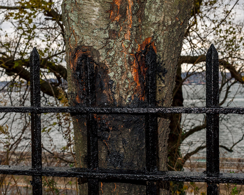 15_Far Apart by James Prochnik_The Wrought Iron Fence In The Tree_Y2A1678