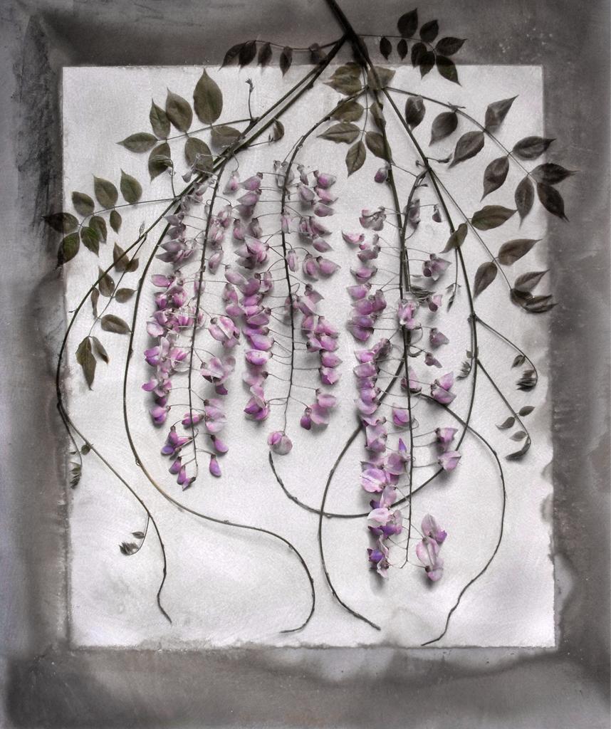 Alida Fish_Wisteria Flowers_2021