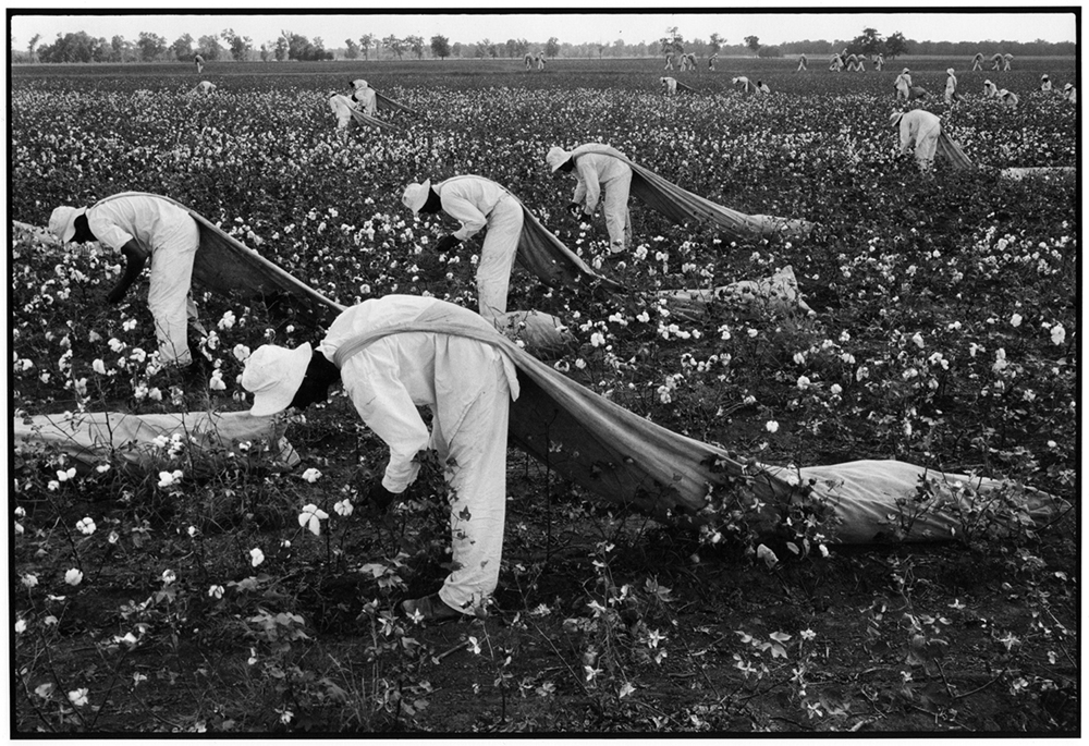 Danny Lyon,Cotton Pickers, Ferguson Unit, Texas Department of Corrections, from Conversations with the Dead, 1968 copyright Dann