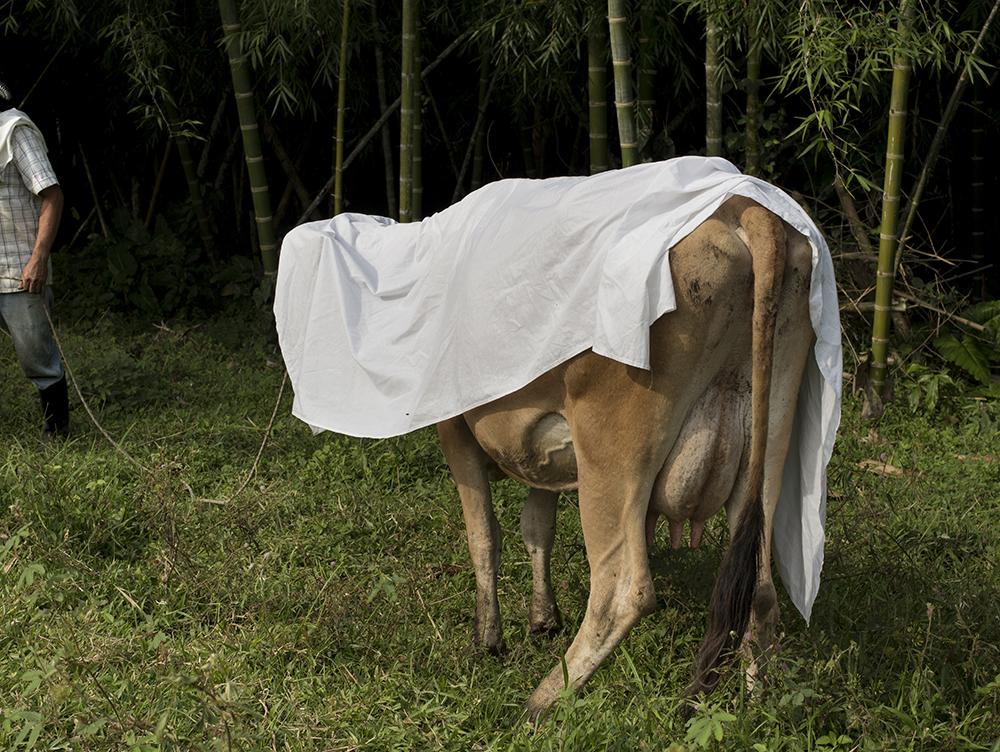 Velasquez_C_El dia que se murio la vaca72-0731