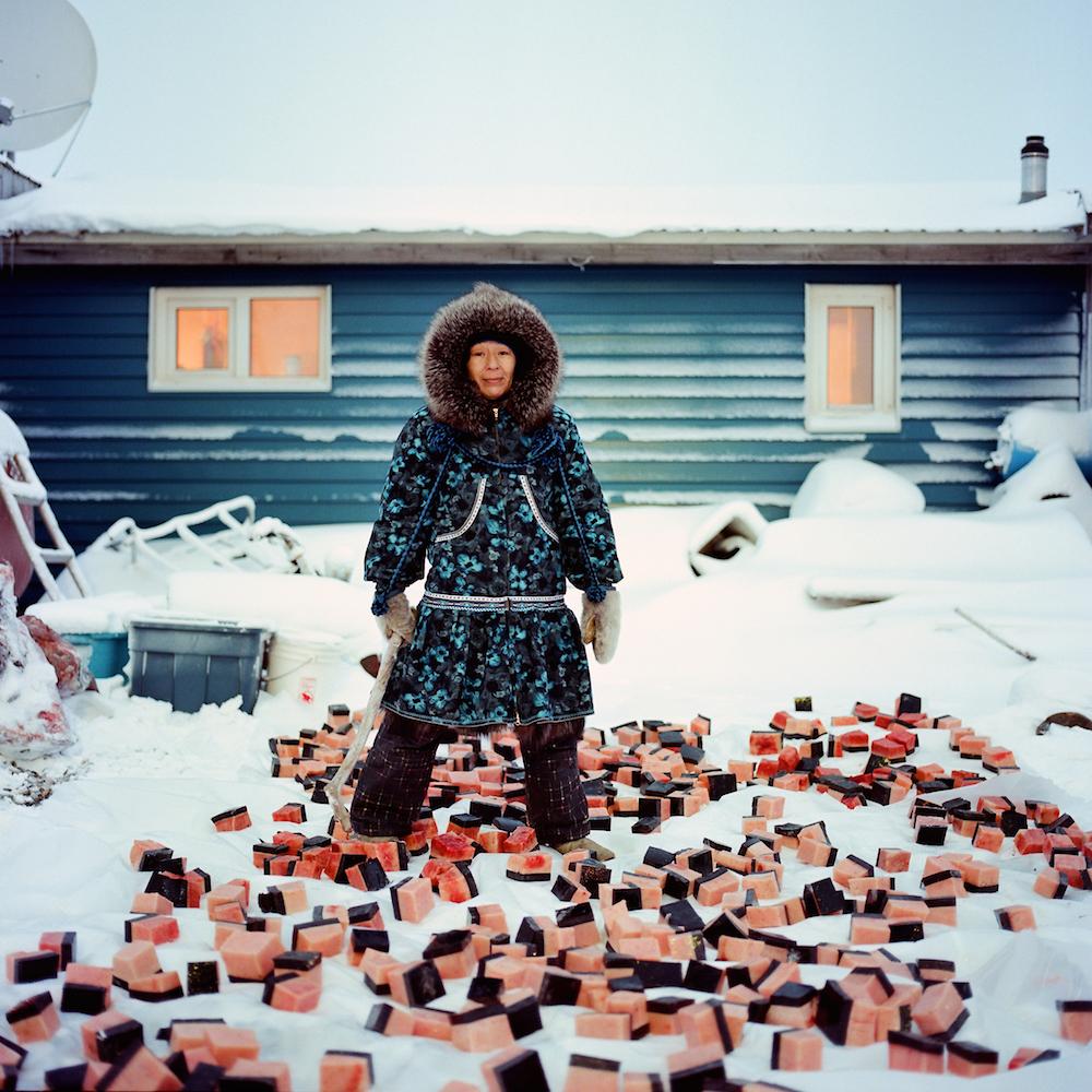 KAKTOVIK, ALASKA - 2015: Marie Rexford of Kaktovik, Alaska preparing maktak for the villages Thanksgiving Day feast.