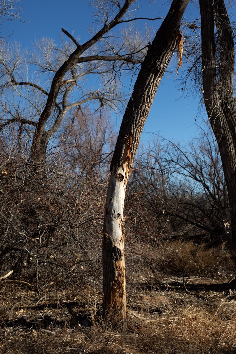 © Jenny Irene Miller, Untitled (tree 2), 2021