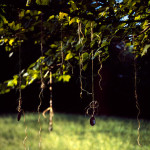 Kauschinger_Lens1