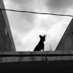 1_DOG ON A ROOF, ISLA MUJERES, MEXICO