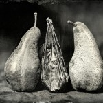 1Bear Gallbladder with Bosc Pears_Christine Fitzgerald