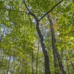 005_Green Forest Sunrise