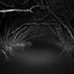 002_011_Mangrove, Everglades, Since_Deystroyed_2017__DX_1003