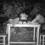 1_possum